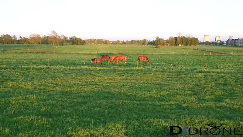 Paarden in weide